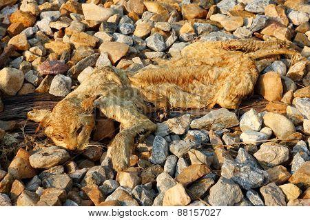 Dead Cat