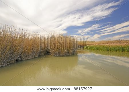 Grasses In A Beaver Pond