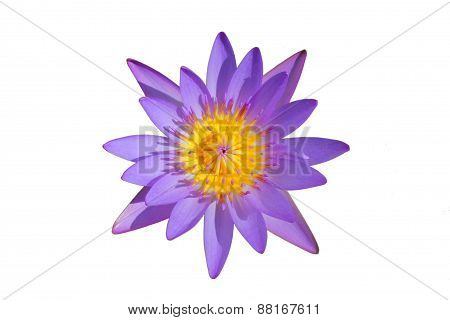 Top View Beautiful Purple Water Lily Isolated on White Background