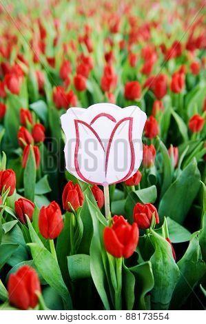 Cardboard Tulip In A Field Of Red Tulips