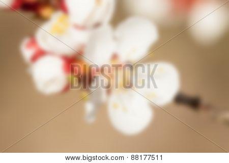 blurred macro apricot flowers