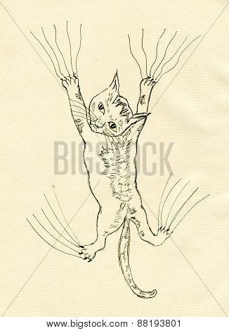 Kitten Scratching Sketch