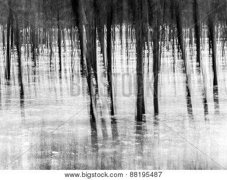 Forest, impressionist blurry background