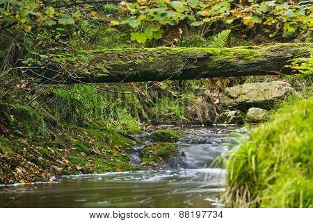 Autumn River And Fallen Tree