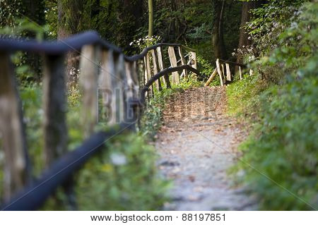 Forest Trail And Railing, Eifel