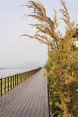 picture of pine-needle  - Close up yellow pine tree and bridge view ot Laos - JPG
