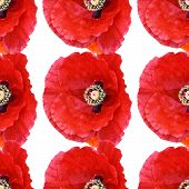 picture of poppy flower  - Beautiful red poppy Papaver rhoeas spring flower seamless pattern of red poppies on white background - JPG