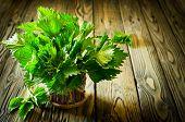 stock photo of nettle  - Bunch of fresh green nettle on wooden background - JPG