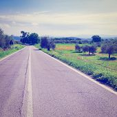 picture of apennines  - Asphalt Road between Poppy Fields and Olive Groves on the Slopes of the Apennine Mountains in Italy Instagram Effect - JPG