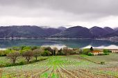 picture of apennines  - Vineyard on the Shore of Italian Lake Corbara in a Rainy Day - JPG