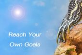picture of craw  - metaphor of Reach Your Own Goals with leg of turtle - JPG
