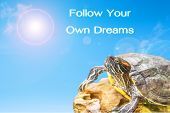 stock photo of craw  - metaphor of Follow Your Own Dreams with turtle and sun background. ** Note: Shallow depth of field - JPG
