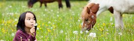 foto of horse girl  - Little Asian girl in the park and horses in background - JPG