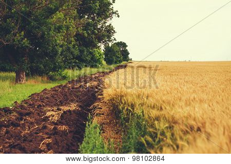 Wheat field with groove