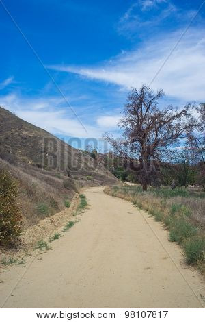 Long Dirt Road In Wilderness