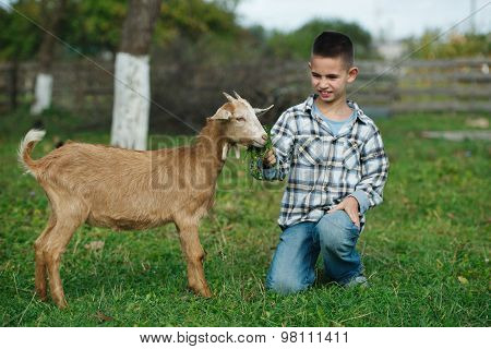 little boy feeding goat in the garden