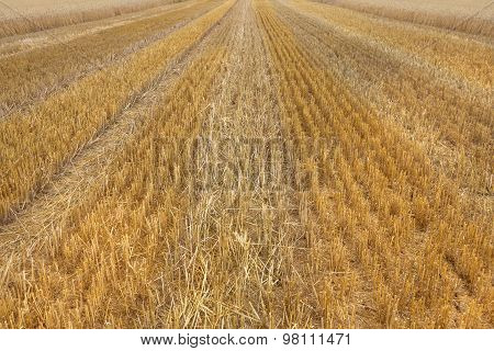 Stubble field with different colored texture