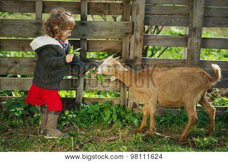 little girl feeding goat in the garden