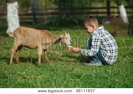 little boy feeding goat in the garden