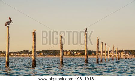 Birds On Pylons