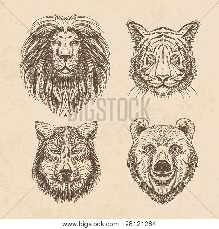 Vector set of hand drawn animal. Vintage illustration with wolf,
