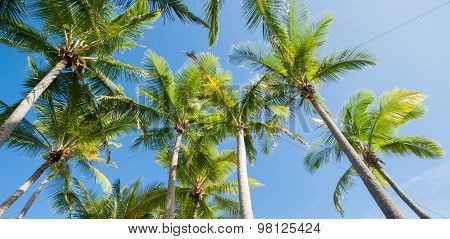 Palm Trees Image.