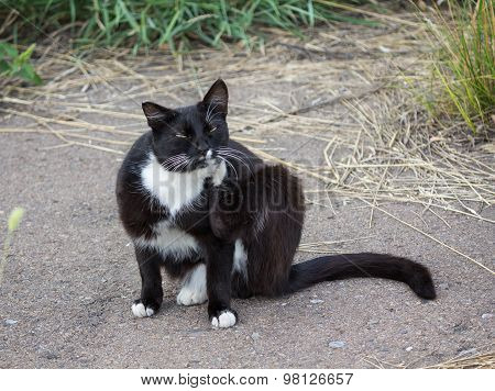 Homeless Cat Scratched Sitting On The Pavement