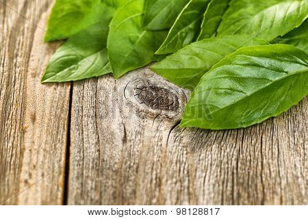 Close Up Fresh Basil Leafs On Rustic Wooden Boards