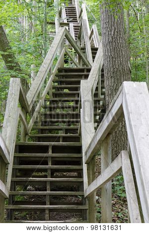 Stairway Ascending A Ravine In A Deciduous Forest