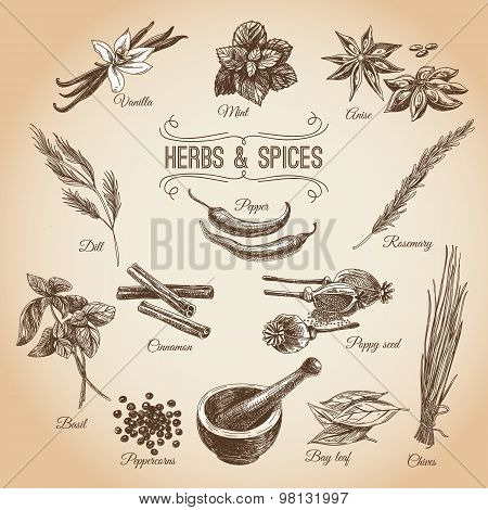 Vector hand drawn set with Herbs Spices. Vintage illustration.