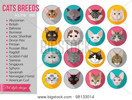 Set of flat popular breeds of cats icons.