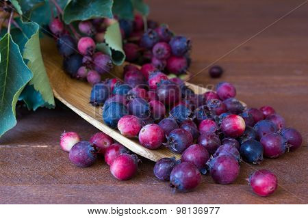 Bunch Of First Wild Autumn Berry, Saskatoon In Front Of Dark Wooden Background
