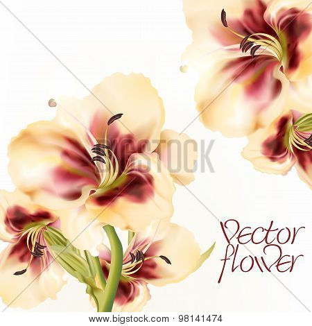 Vector Illustration With Realistic Lily Flower