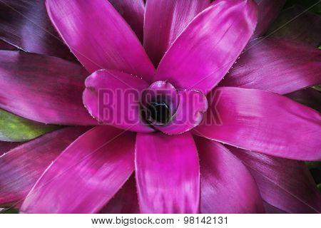 Magenta Flower Leaf