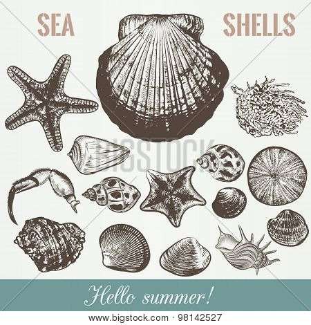 Vector Sea Shells High Detailed Objects