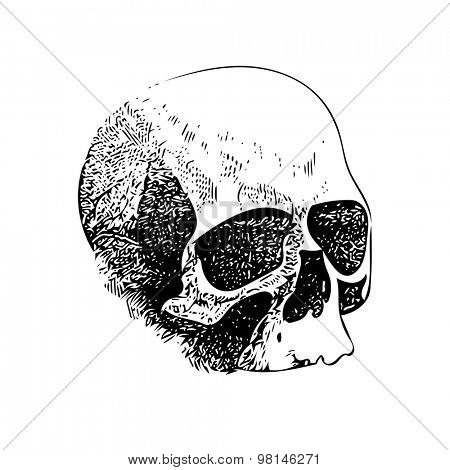 Skull. Hand drawn. Vector illustration. (one color, easy editable compound path)