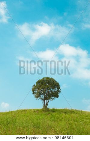 Big Tree On The Hill