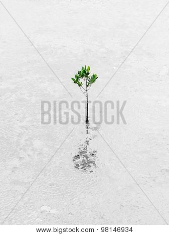 Plant Growing Through Dessert Survive Business Conceptual