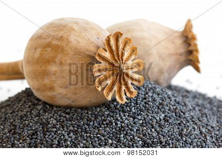Detail Of Two Dried Poppy Seed Pods Resting On Heap Of Seeds.