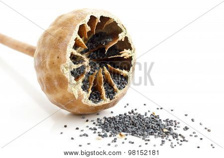 Single Cut Open Poppy Seed Pod With Seeds Spilling Out On White.