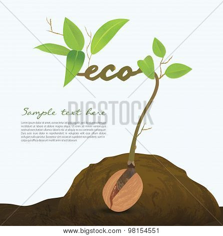 Creative seed idea abstract info graphic, concept image of small plant sprout, Vector illustration,