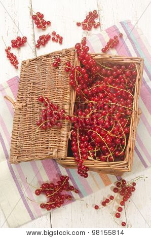Freshly Harvested Redcurrants In A Basket
