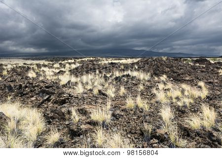 As years of dried lava rests untouched, grass has taken root and made it way up through the porous, hardened earth.