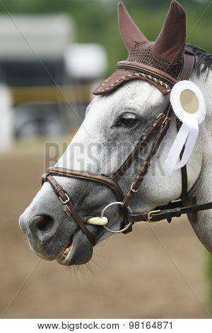 Award Winning Racehorse During Celebration On A Show Jumping Event