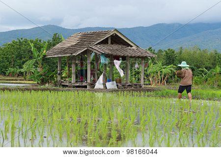 The Farmer's Hut