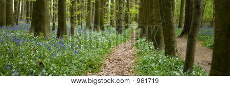 Stroll Along The Path