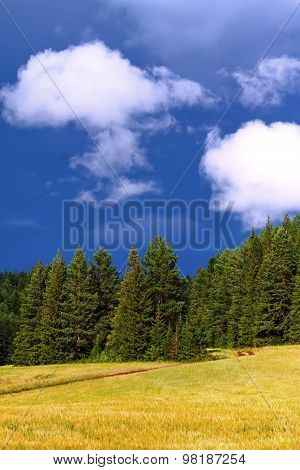 Meadow, Wood, Landscape