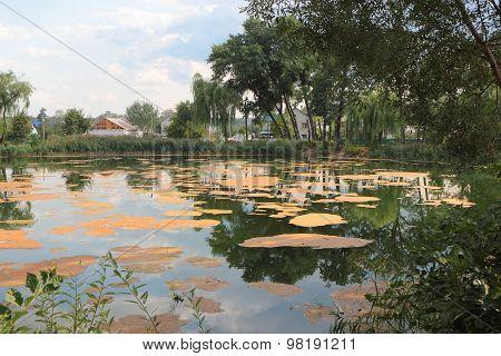 Abandoned pond.