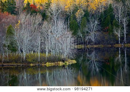 Fall Foliage Water Reflections