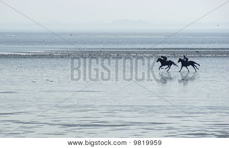 Racehorses on Powfoot beach, Scotland